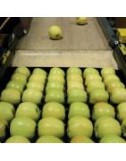 Środki smarne SKF dla przemysłu spożywczego i do produkcji napojów
